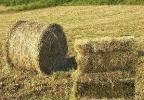 Куплю сено
